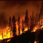 WILDFIRE–FOREST-_8470